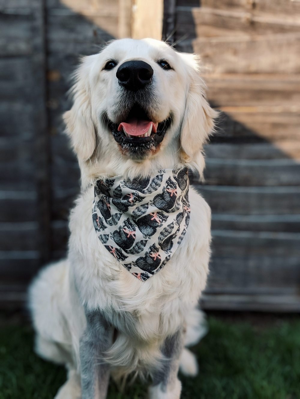 Looking dapper in his new bandana