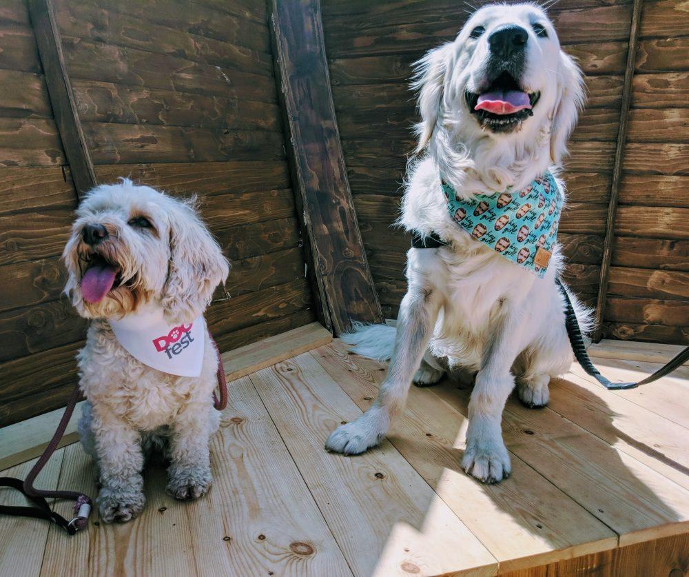Piper & Woody
